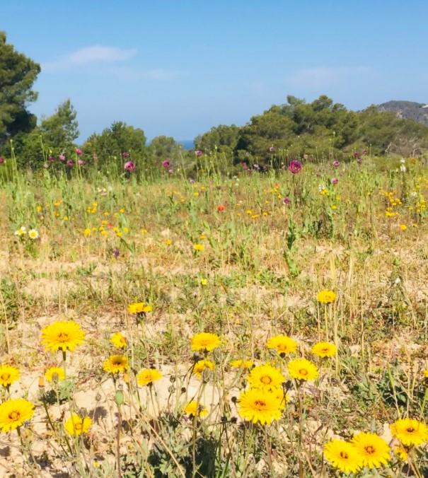 Flower field Spring vibes